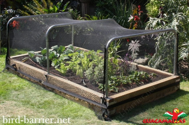 Hortomallas netting sizes are suitable for being an effective bird barrier.