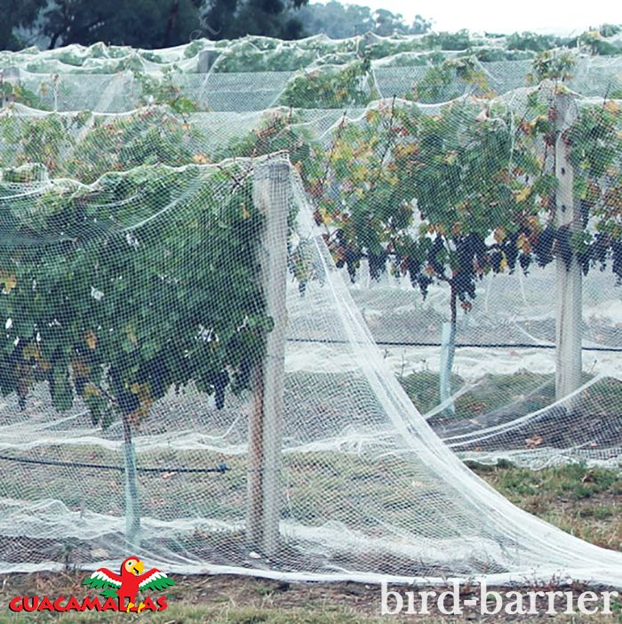 GUACAMALLAS nettting a animal friendly solution to birds.