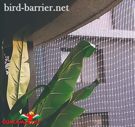 The benefits of anti-bird netting are to prevent economic losses.